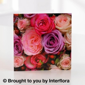 Pink Rose Greetings Card